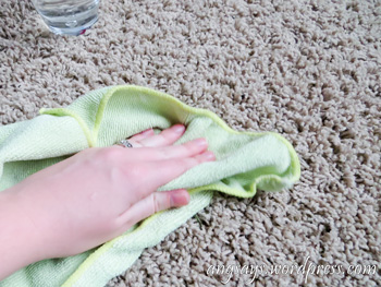 how to get spaghetti sauce out of carpet
